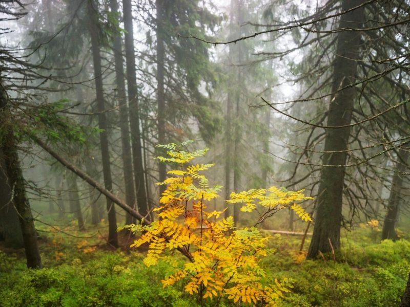 Wie krank sind deutsche Wälder wirklich und was wir alle tun können