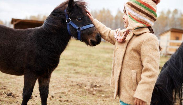 Wie Menschen seit Urzeiten mit Tieren kommunizieren können